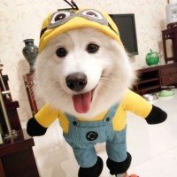 2016 Hot Sale modelling of Minions micky Dog Costume ...