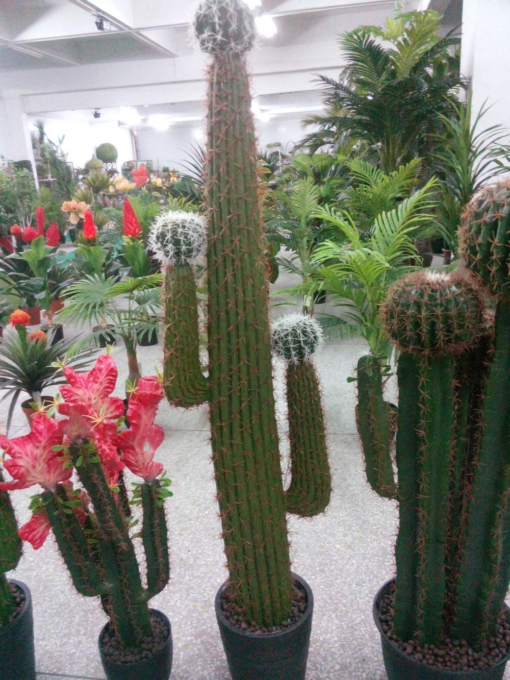 Tall Cactus Sale