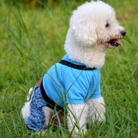 Popular Cute Boy Dog Clothes-Buy Cheap Cute Boy Dog ...