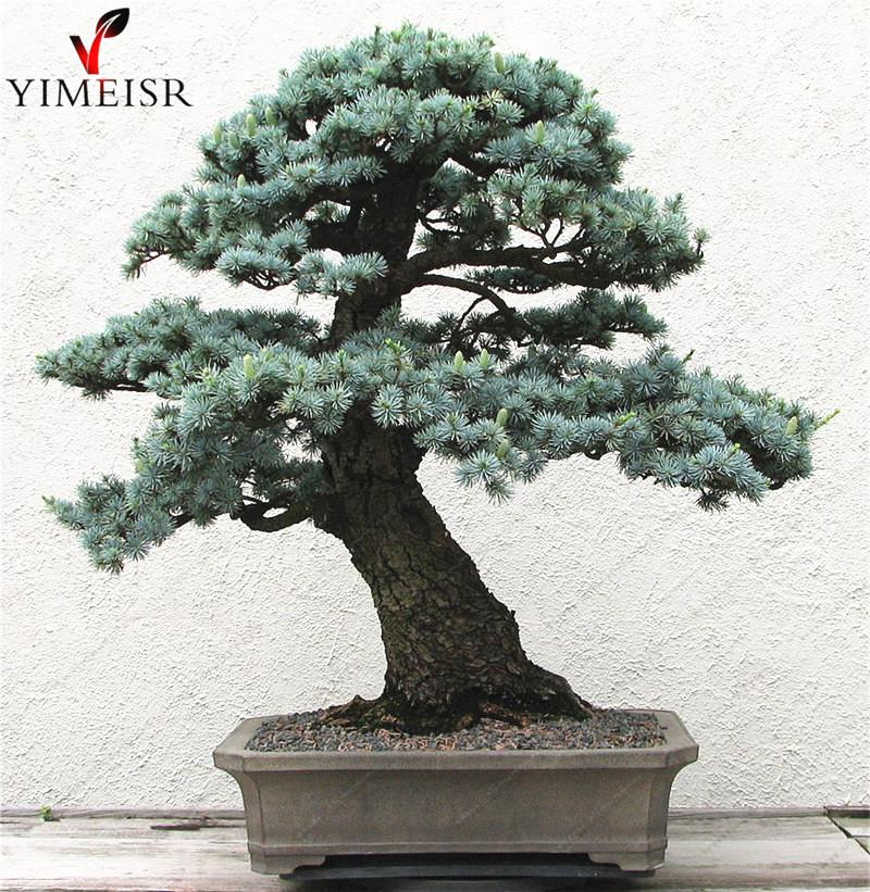 Online kopen Wholesale kamerplanten boom uit China