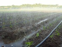 Agriculture Flat Sprinkler Irrigation Pipe For Irrigation ...
