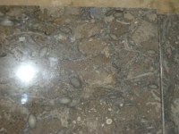 Fossil Dark Brown Limestone For Interior Flooring And ...