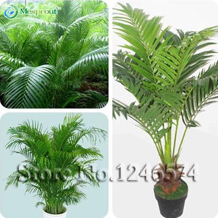 Online kopen Wholesale decoratieve kamerplanten uit China