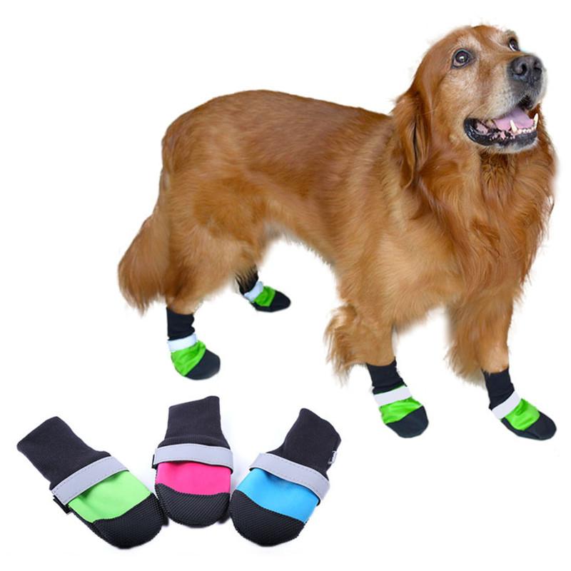 Dog Shoe Promotion