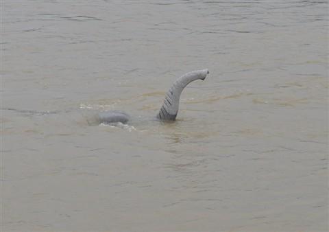 elephant under water: jamesbom: Galleries: Digital