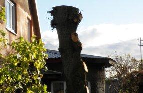 Vale lõikus muudab puu väärtuse nullilähedaseks