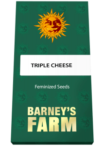 cheese seeds south africa 6