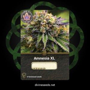 Amnesia XL Feminized 1