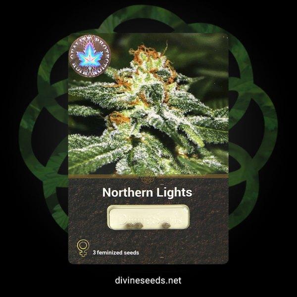 Northern Lights Feminized1