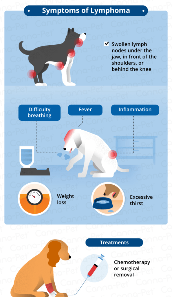What Causes Swollen Lymph Nodes in Dogs?   Canna-Pet®