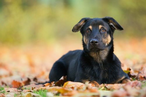 Intestinal Obstruction in Dogs What to Do CannaPet
