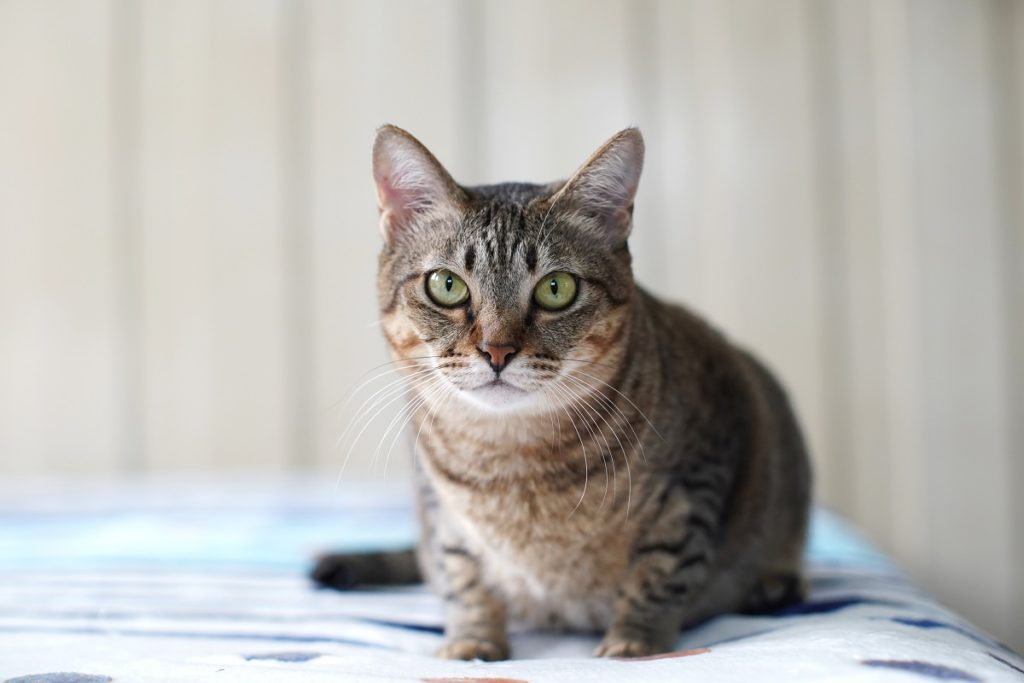 common causes of cat