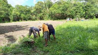 Foto de Mulheres Quilombolas vão produzir hortaliças que beneficiarão famílias carentes em Bequimão