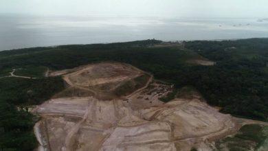 Photo of Corte de árvores em São Luís: o buraco é mais embaixo