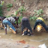 Lack of water, facilities: FCT Butchers resort to feaces infested stream