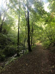 星野温泉の野鳥の森
