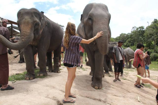 how to afford traveling the world in your 20s elephants