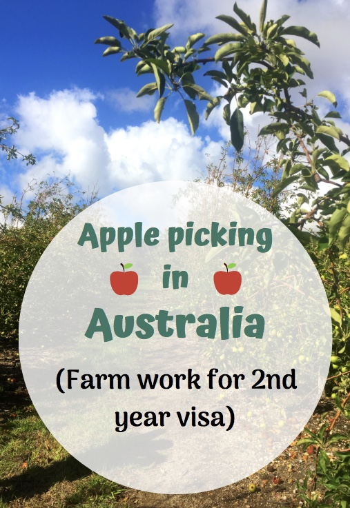 Apple picking in Australia second year visa backpacking travel