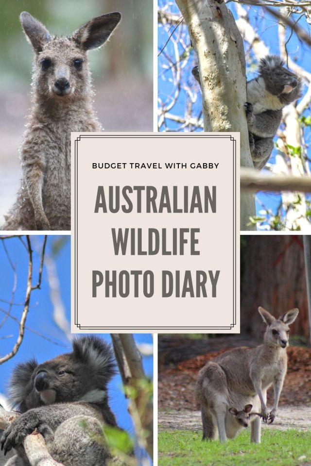AUSTRALIAN WILDLIFE PHOTOGRAPHY