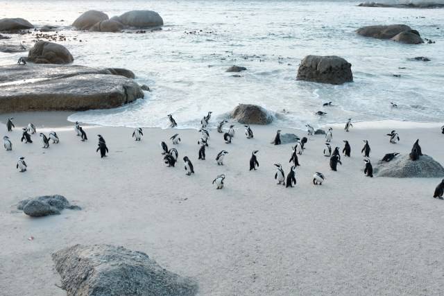 3 days in Cape Town itinerary penguins