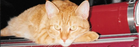 cropped-cropped-cropped-cats712.jpg