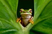 The Amphibian Truth gabbywild