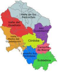 cómo contratar un perito judicial en Córdoba