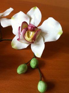 Orchideen12