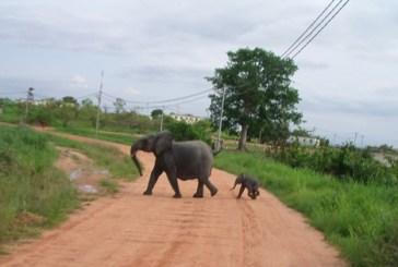 Conférence internationale  sur la réduction des conflits homme-faune à la Lopé et à Libreville