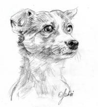 schizzo a matita del cane di Rebecca