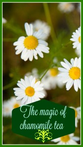 I am happy to help you find out how many benefits can this small flower bring us. I was amazed when I started reading about them and kept finding more and more. It felt like they were endless. www.gabriela.green