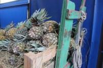 Abacaxis no depósito do Mercado Municipal