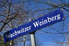 Wachwitzer Weinberg