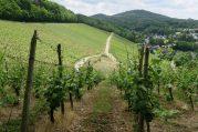Oberdollendorf Weinwanderweg