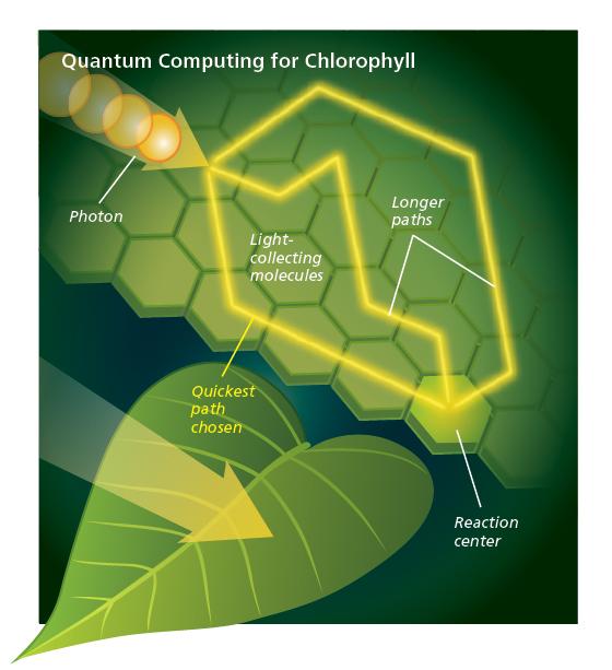Biologia quantistica: ordine dall'ordine
