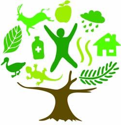 UN forests logo