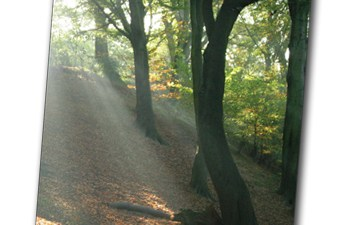 State of the UK's Forests Woods and Trees report