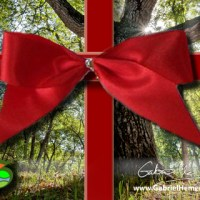 Top ten gifts for the tree and nature lover