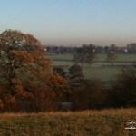 Autumn oak and Abbey