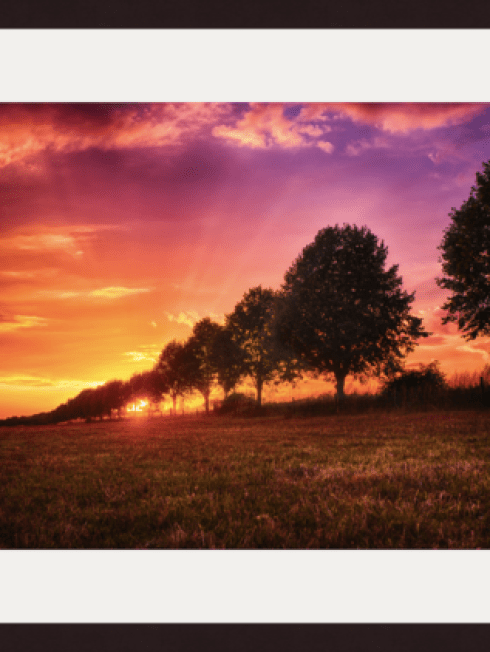 Sunset and trees