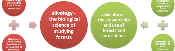 silvology defined