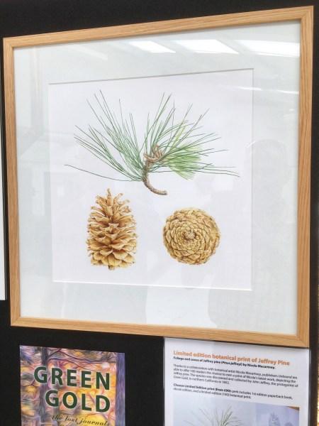 Jeffrey pine limited edition print