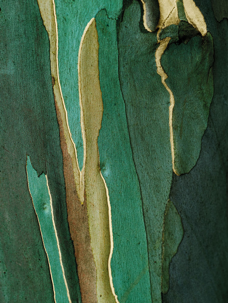 Tree Bark image for Temple Spa by Gabriel Hemery