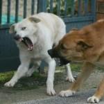 cani-arrabbiati
