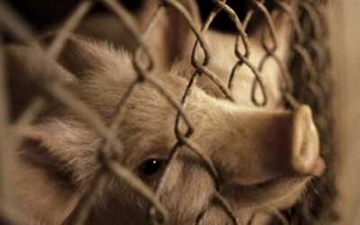 sofferenza animale