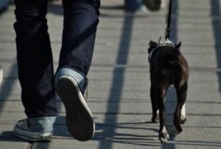 a_passeggio_con_il_cane