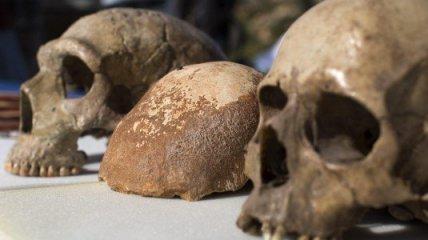 teschio-archeologico