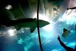 Aquarium Barcelona Shark Apptriper