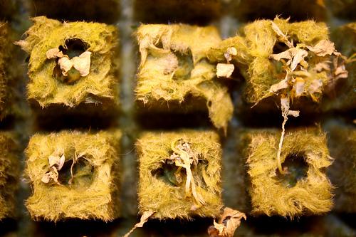 Lee Mandel, founder and community-based farmer at Boswyck Farms, created a hydroponic farm in his loft for the food desert in his Bushwick, Brooklyn community. Photo by Gabrielle A. Wright.