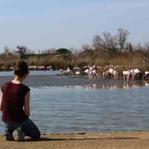 Watching Flamingos at the Camargue, Gabrielle George